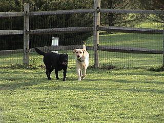 Tango + Lily in Yard