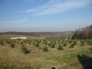 View from the Christmas tree farm