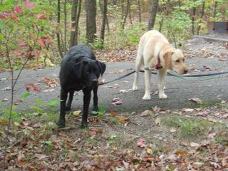 Tango and Lily on Leash