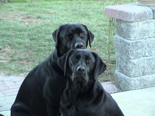 Rocky + Lily