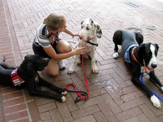 Laurie with 3 Great Danes