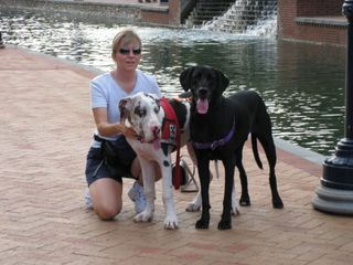 Talos, Nemo + Laurie in Frederick, MD