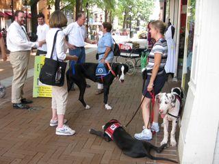 Service Dog Training in Charlottesville, VA
