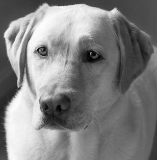 Tango, READ dog