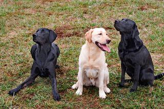 20071126-smartdog-048