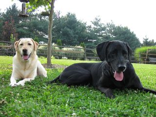 Tango and Nemo enjoying the shade