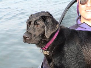Lily enjoying the boat on Lake Anna