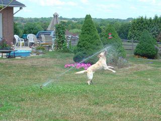 T_jump_sprinkler