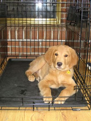 Teddy_in_crate