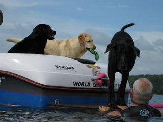 Three dogs on the back of the boat