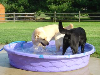 The Kiddie Pool