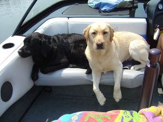 Tango and Lily enjoying the boat on Lake Anna