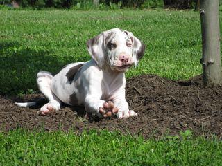 Puppy Talos