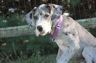 puppy training, house training, potty training, housetraining puppy, puppy class, socialization, Smart Dog,