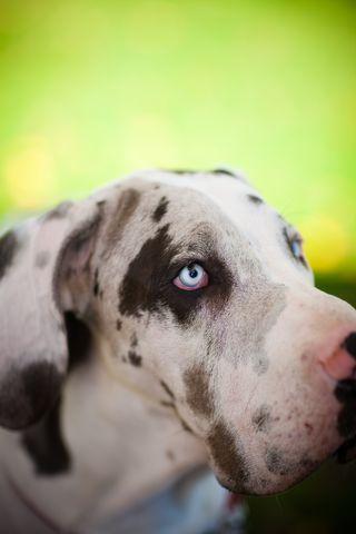 service dog, dog training, assistance dog, therapy dog, dog obedience, Frederick, Smart Dog, puppy training, dog classes