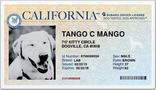 TangoDL