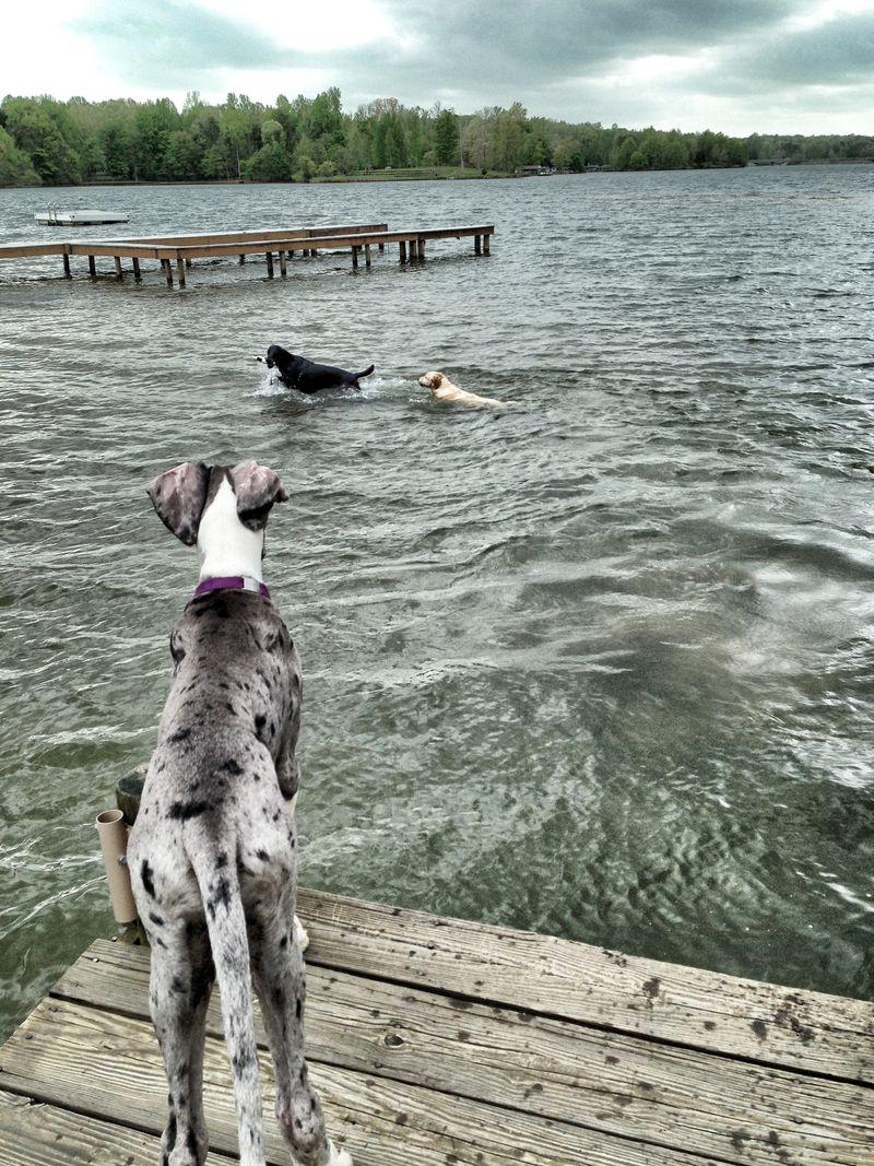 Schooner_dock