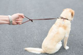 dog training, loose leash, pulling on leash, dog obedience