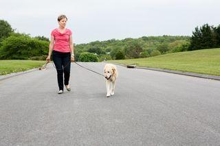dog training, dog obedience, dog classes, dog pulls on leash, stop pulling, Smart Dog