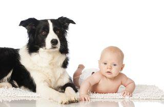 Baby_Dog2
