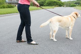 dog training, clicker, positive, Frederick, dog obedience, dog pulls on leash