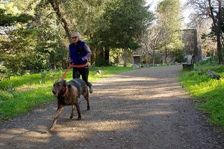 dog, jogger, running, run with dog,