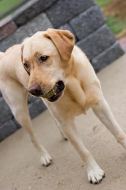 20071126smartdog029