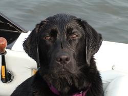 Pretty_lily_boat_2